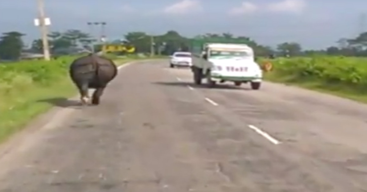 Watch this incredible video of a rhino charging at traffic in India