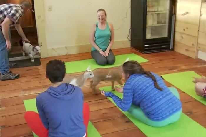 The latest yoga trend involves yoga with kids, the four-legged kind.