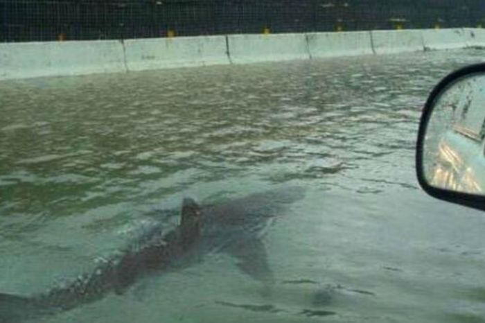 The internet responds to seeing the same shark picture after each flood-related disaster