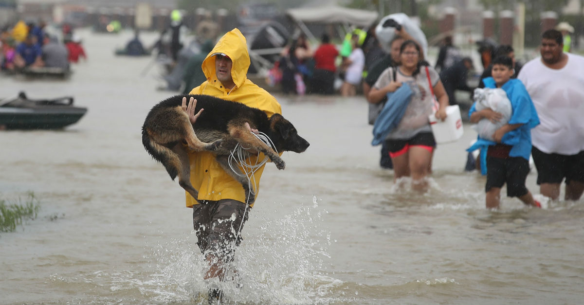 It's hard to find this kind of compassion for animals during a disaster, but Houston broke the mold