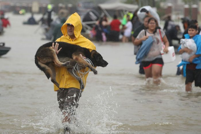 An animal rescue charity outside of Houston is under fire for leaving more than 50 dogs in Harvey's rising waters