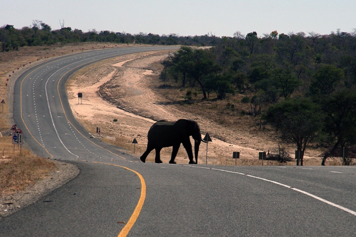 Nine elephants were tragically killed in an electrocution accident in Botswana
