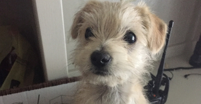 A puppy-borne illness has made almost 40 people seriously ill