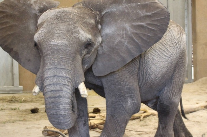 A young elephant has tragically and suddenly died at a zoo in Omaha