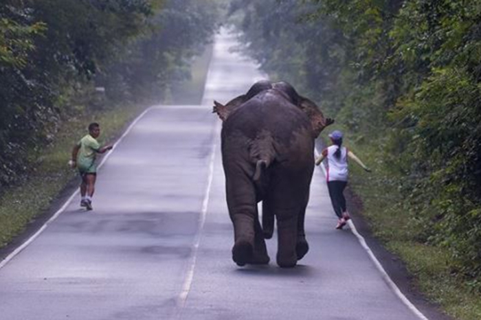 A couple in Thailand were chased by an elephant following a misguided selfie attempt