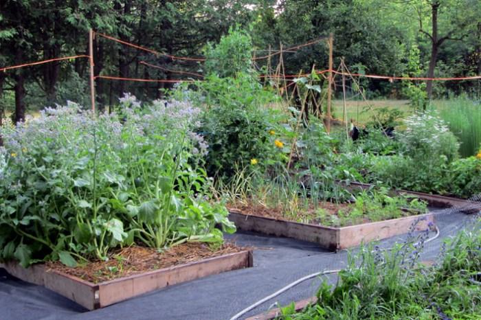 10 tips on preparing your garden for winter