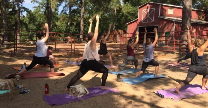 If you're looking to spruce up your workout regimen, Goat Yoga is becoming irresistible to Houston's yogis