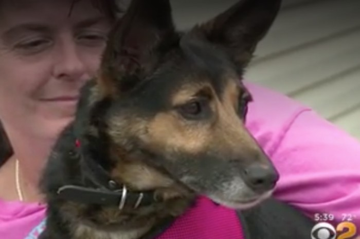 A missing dog's family had given up hope until she showed up in the most unlikely of places