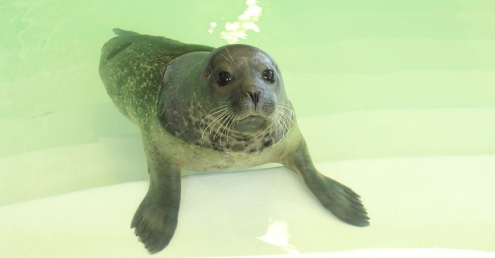 A seal who had to have his flipper amputated is safe at a Niagara Falls aquarium