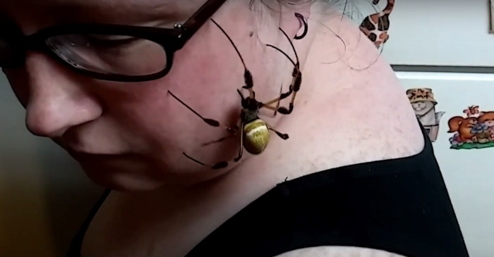 Woman Lets Huge Spider Crawl All Over Her Face on Video and We're Not Okay