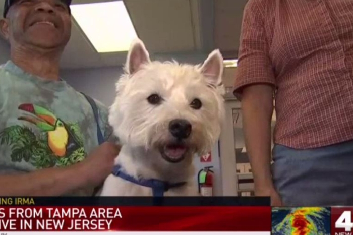A New Jersey shelter had an adoption spree for animals rescued from Hurricane Irma