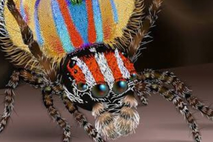 Photos of Bizarrely Colorful 'Peacock Spiders' Appear Online