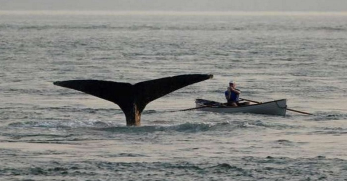 This man in a rowboat nearly became Jonah when he encountered a humpback whale