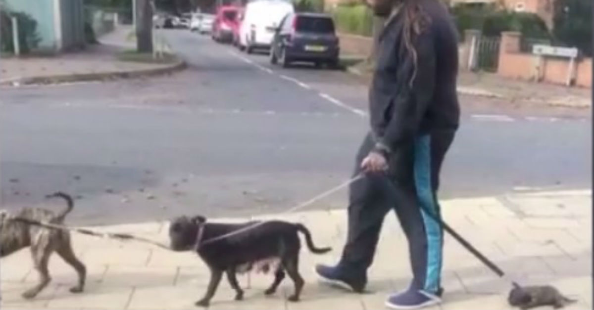One bystander protests a court's leniency after a video shows a man dragging his puppy