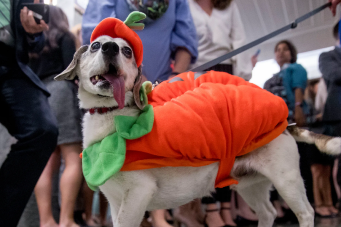 Pet Owners Show Off Their Animals in Halloween Costumes