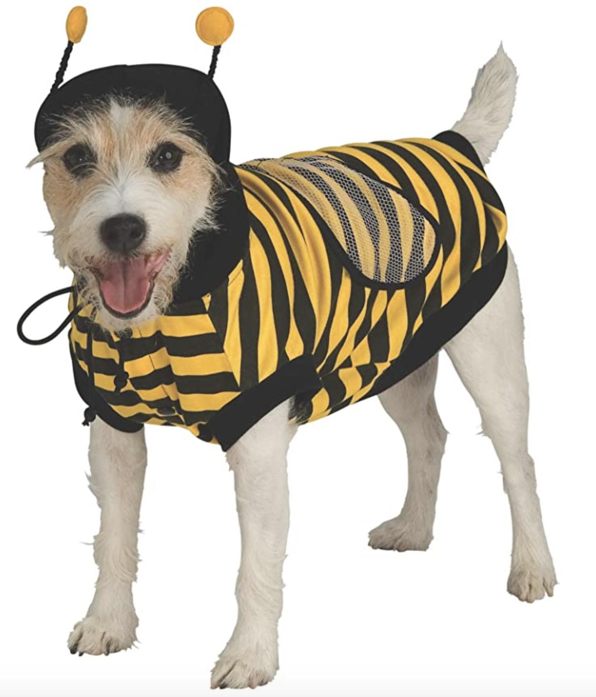 Dog Bumblebee costume