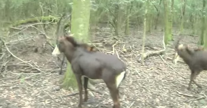 """Zookeepers are letting African antelopes """"do their own thing"""" in New Orleans"""
