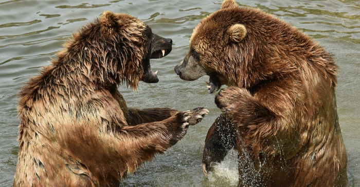 Russian bears are devouring humans due to a lack of alternative food sources