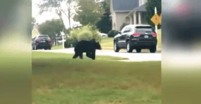 """You got to be kidding me"": A bear runs through the neighborhood"