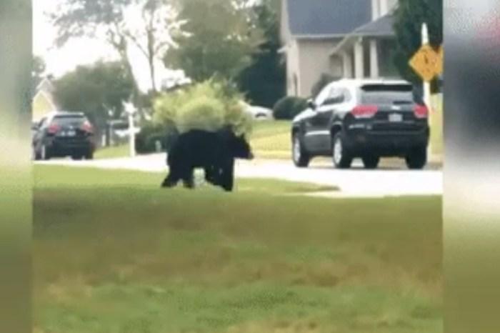 """You got to be kidding me"": A bear runs through the neighborhood"