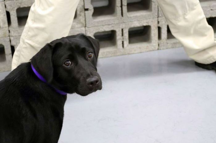 The CIA tweets the story of a rejected bomb-sniffing puppy, and we can't deal