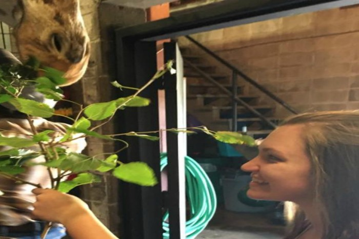 A Missouri man proposes with a little help from a very tall friend