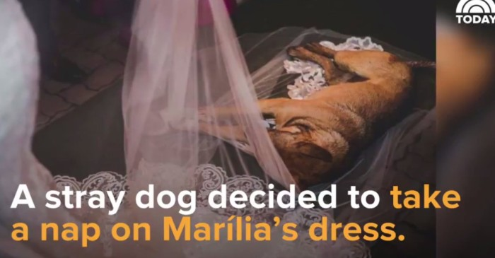 A stray dog crashed a wedding in Brazil and became the life of the party