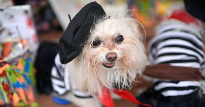 Pets get in on the Halloween spirit, and our hearts can't take it