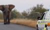 Kruger Sightings/YouTube/Screenshot