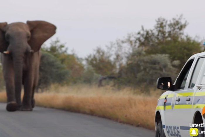 A video captures the dramatic showdown between an elephant and a car