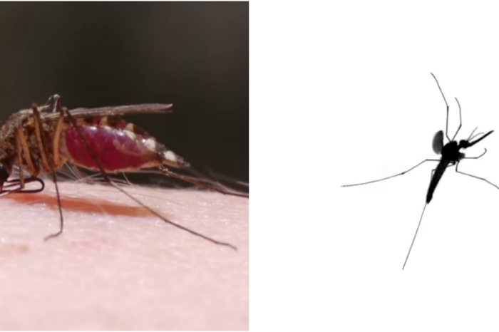 Researchers recently discovered something about mosquitoes that will make your skin crawl