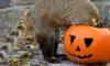 Hungary Zoo Halloween