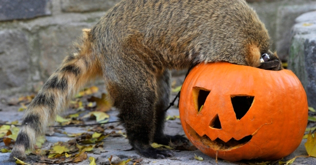 10 things you can do with your Halloween pumpkins besides carve them