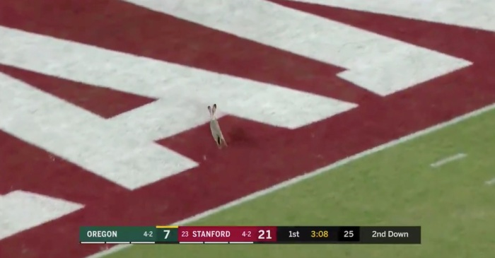Fast, elusive rabbit interrupts a college football game — has already turned pro