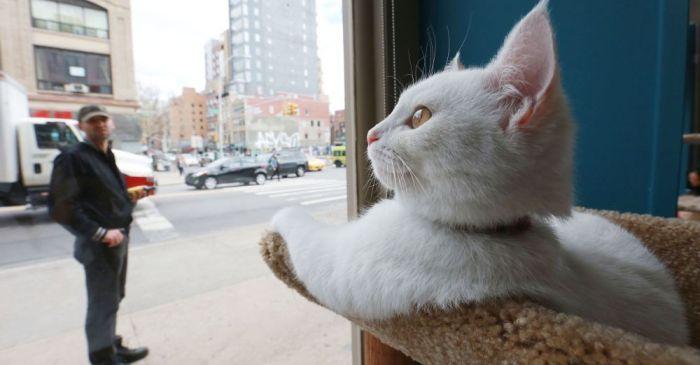 Bucktown's Cat Cafe randomly vandalized weeks before it's opening