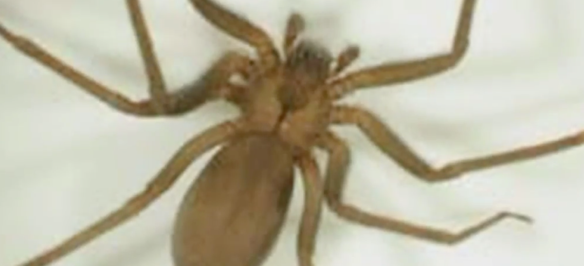 Two firefighters fall victim to very rare spiders