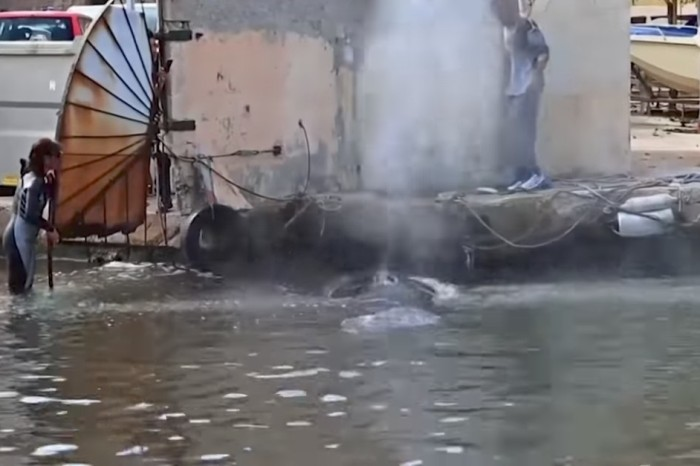 A whale arrives in a French port, only to discover it couldn't leave