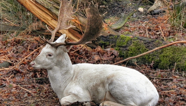 Hunter shoots down rare albino deer this past week