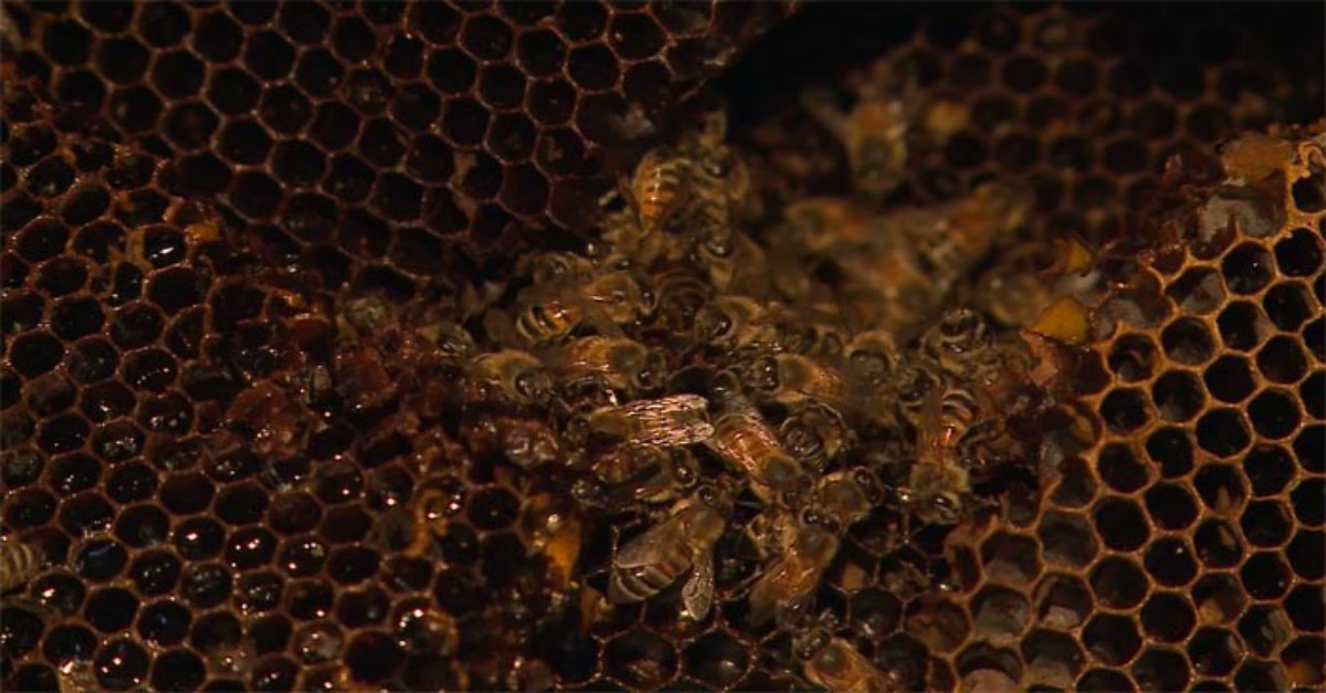 An insane amount of honey bees were found in this unsuspecting woman's house