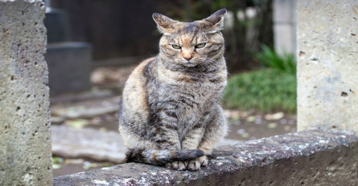 A Japanese cat shocks the nation by standing accused of attempted murder