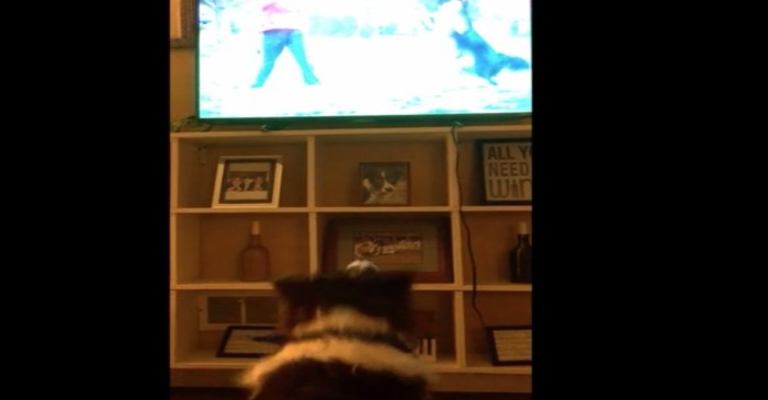 This border collie enjoys his TV time in this adorable viral video