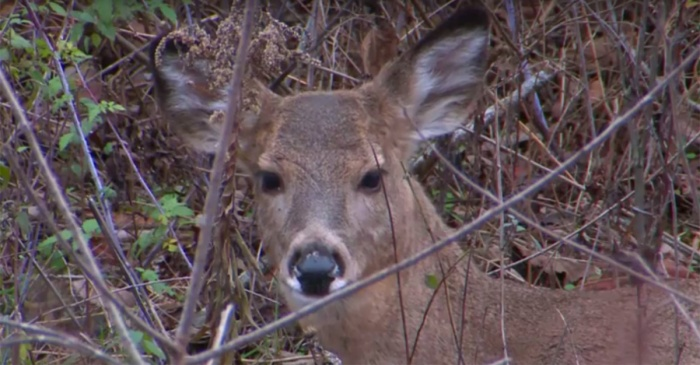 This deer disease is sparking debate and could forever change how we hunt