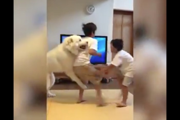 Watch what happens when this giant canine tries to break up a fight between 2 brothers