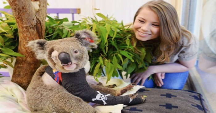 After a vehicle accident, this koala has become the first koala pirate