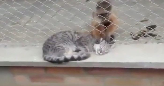 Watch what happens when a cat gets a most unlikely grooming session at a zoo