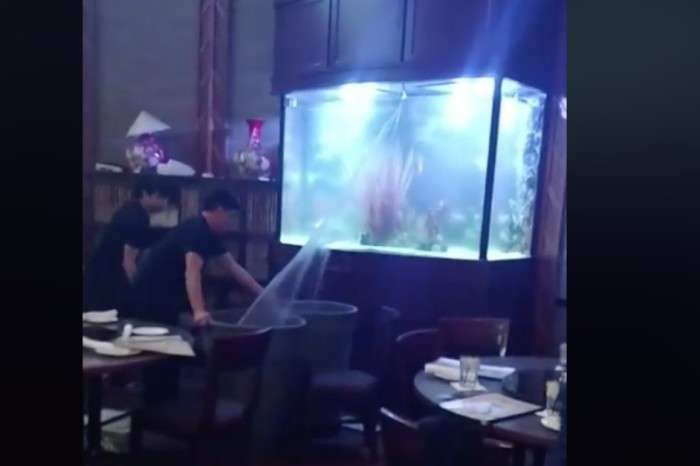 Cameras catch an aquarium spilling on Christmas dinner at a Houston restaurant