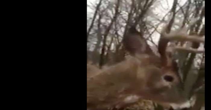 A Wisconsin hunter got into a surprising tussle with a bizarrely friendly deer