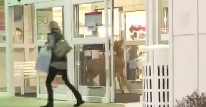 "People were stunned when a buck ""doing last minute Christmas shopping"" caused chaos in a Kohl's"