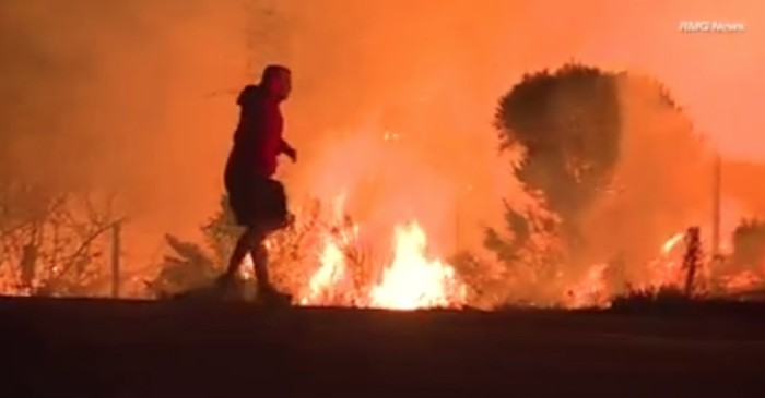 A heroic bystander saved the life of a rabbit as the California fires roared around them