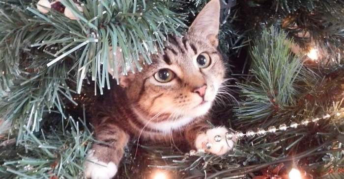 This cat figured out what it's getting for Christmas — and Twitter is impressed